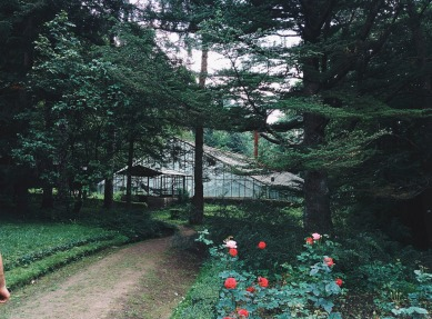 park-918515_1920